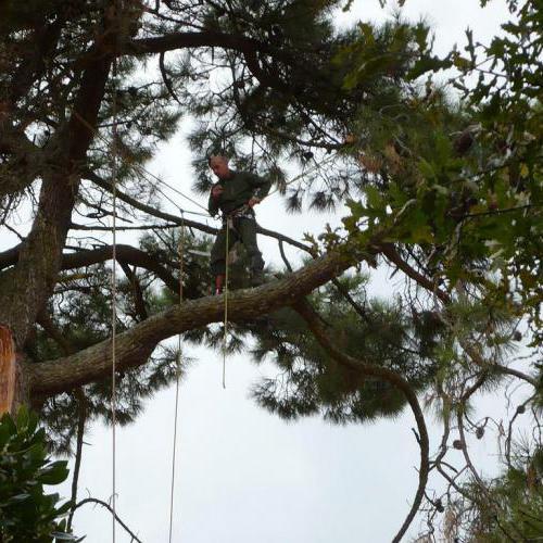 Arboriste grimpeur élagage